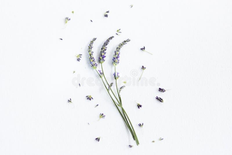 Grupo de flores da alfazema fotografia de stock royalty free