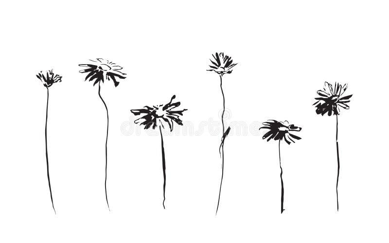 Grupo de flores da camomila Imagem do vetor pintada pela tinta Ilustração tirada da mão preta ilustração do vetor