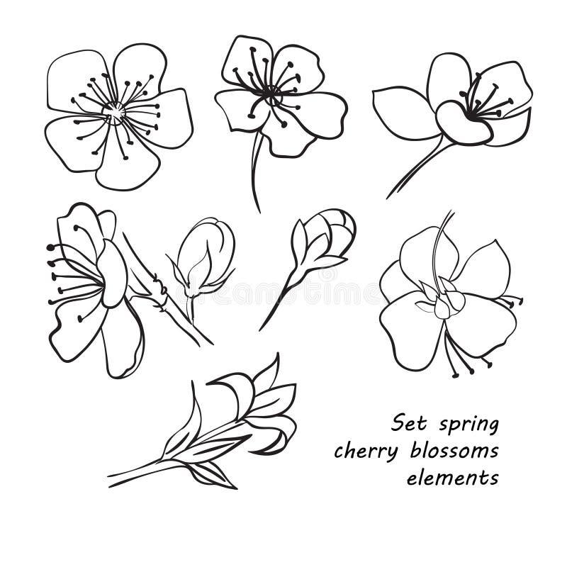 Preferência Grupo De Flores Da Flor De Cerejeira Da Mola Desenho Da Mão  TN11
