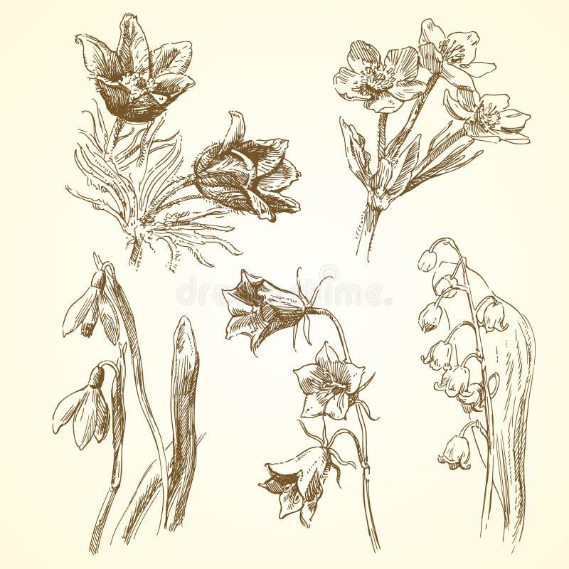 Grupo de flores da mola ilustração stock