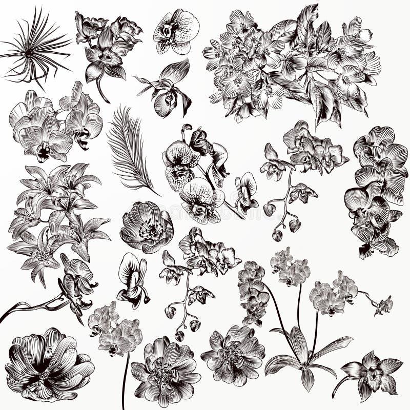 Grupo de flores detalhadas da orquídea do vetor ilustração do vetor