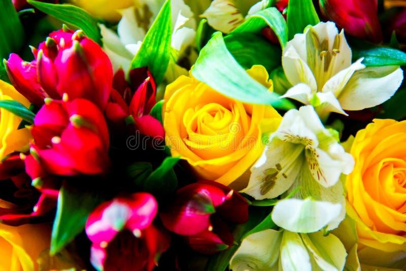 Grupo de flores diferente e fresco imagem de stock royalty free