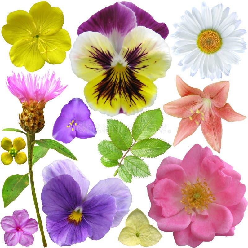 Grupo de flores diferentes imagem de stock royalty free