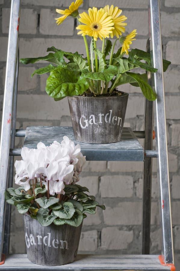Grupo de flores diferentes do jardim imagem de stock