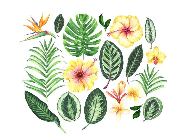 Grupo de flores e de folhas tropicais da aquarela ilustração royalty free