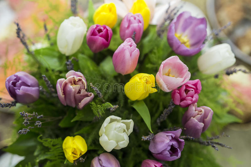Grupo de flores Flores do Tulip cores foto de stock royalty free