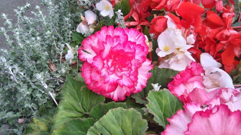 Grupo de flores, grande flor center foto de stock royalty free