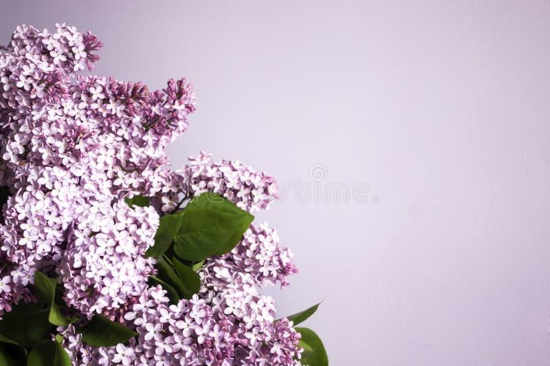 Grupo de flores lilás no fundo violeta, espaço da cópia imagem de stock royalty free