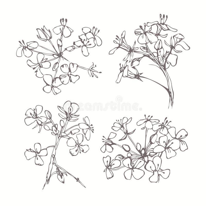 Grupo de flores monocromáticas isoladas no fundo branco Mão dracma ilustração stock