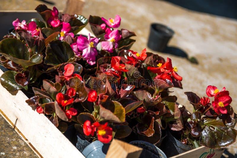 Grupo de flores para plantar imagens de stock royalty free