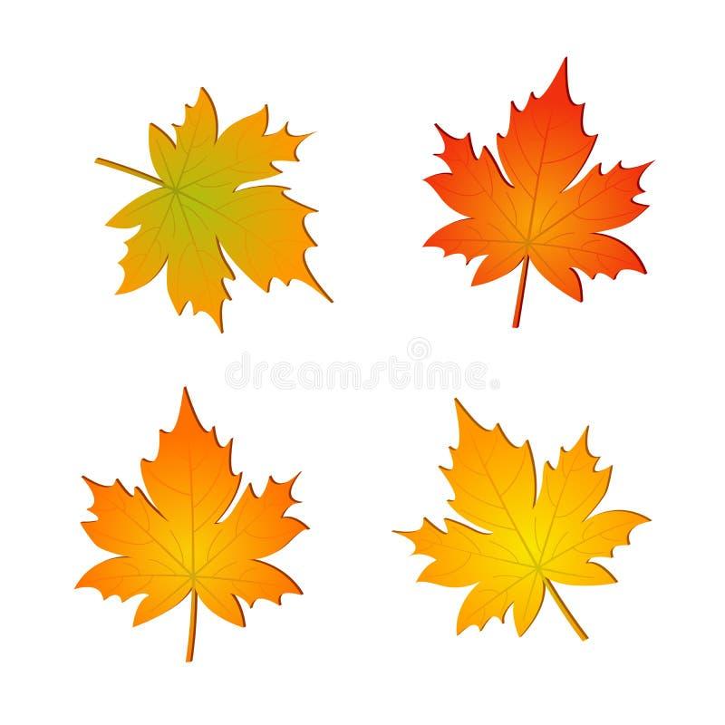 Grupo de folhas de bordo do vetor do outono ilustração royalty free