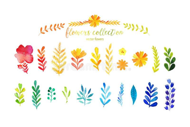 Grupo de folhas coloridas da aquarela Ilustração do vetor o grupo do vetor de aquarela vermelha do outono sae e bagas, o projeto  ilustração royalty free