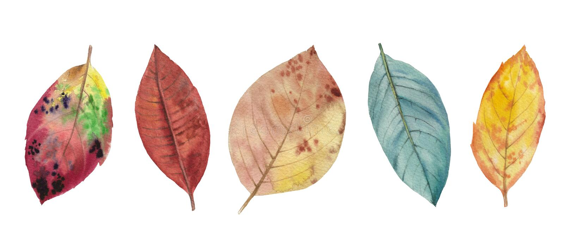 Grupo de folhas da aquarela Isolado no fundo branco Para o projeto ilustração royalty free