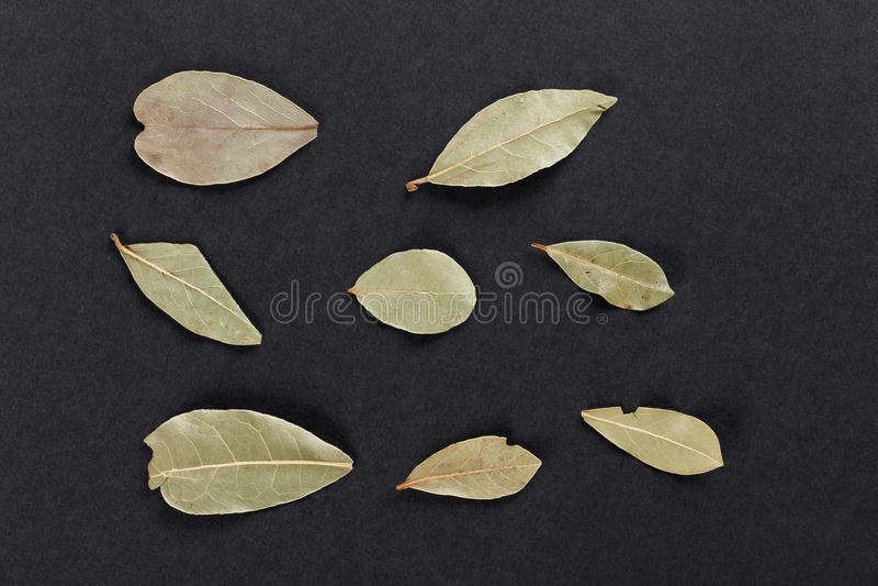 Grupo de folhas de baía no papel preto imagem de stock royalty free