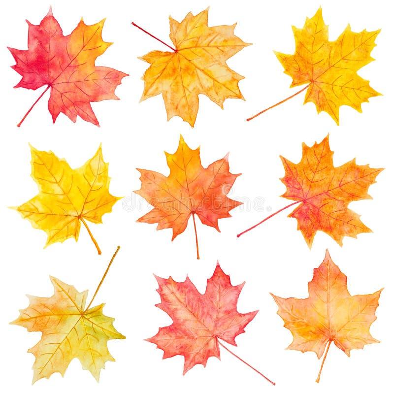 Grupo de folhas de bordo do outono da aquarela ilustração stock