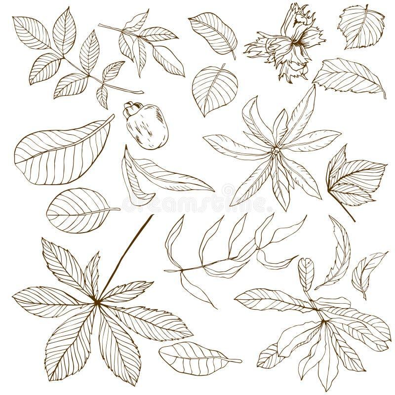 Grupo de folhas nuts diferentes ilustração do vetor
