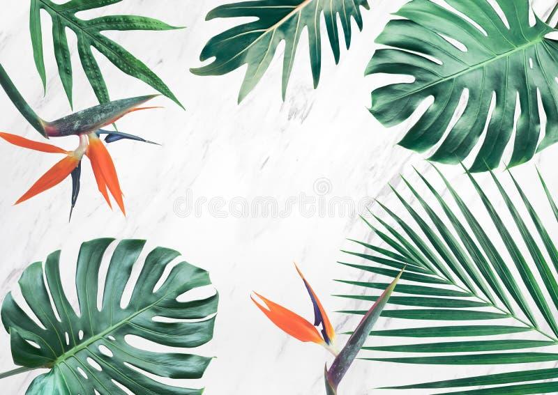 Grupo de folhas tropicais no fundo de mármore Copie o espaço nave ilustração royalty free