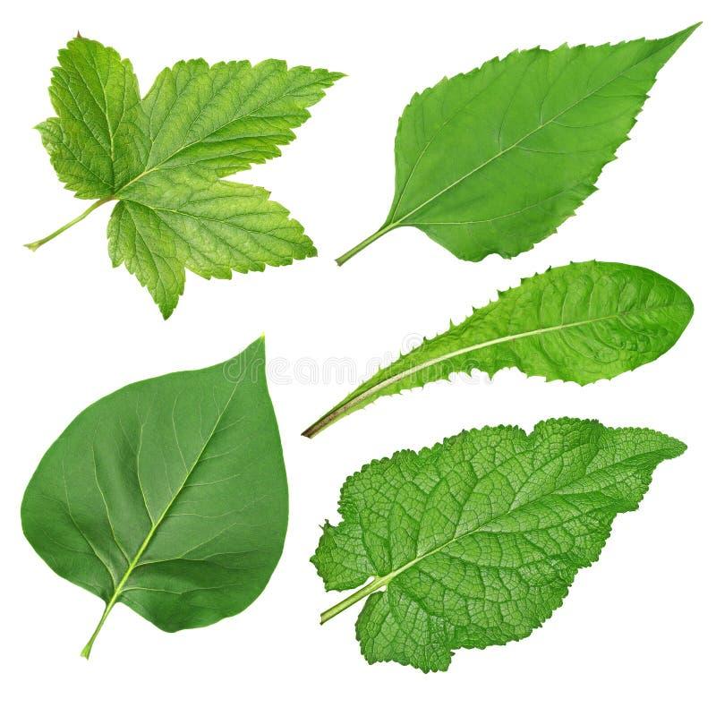Grupo de folhas verdes fotografia de stock royalty free