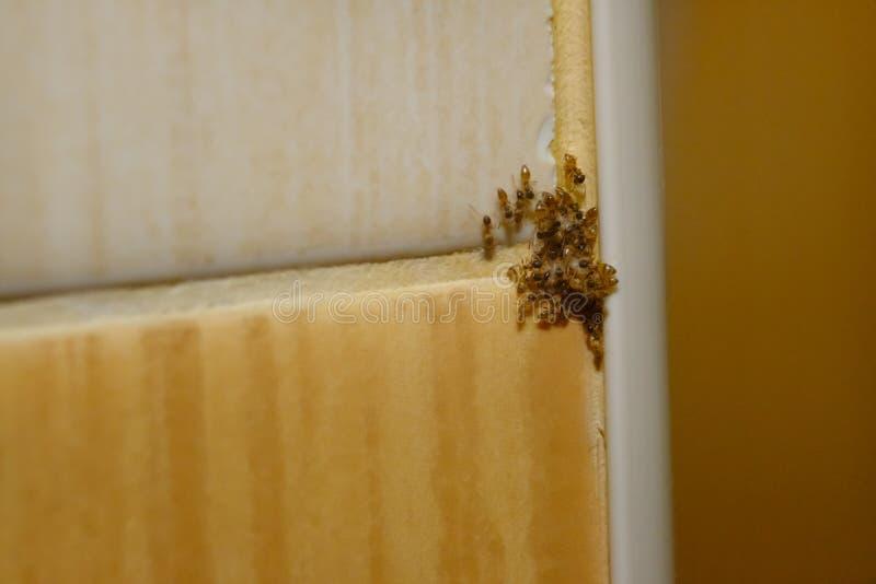 Grupo de formigas na unidade imagem de stock royalty free