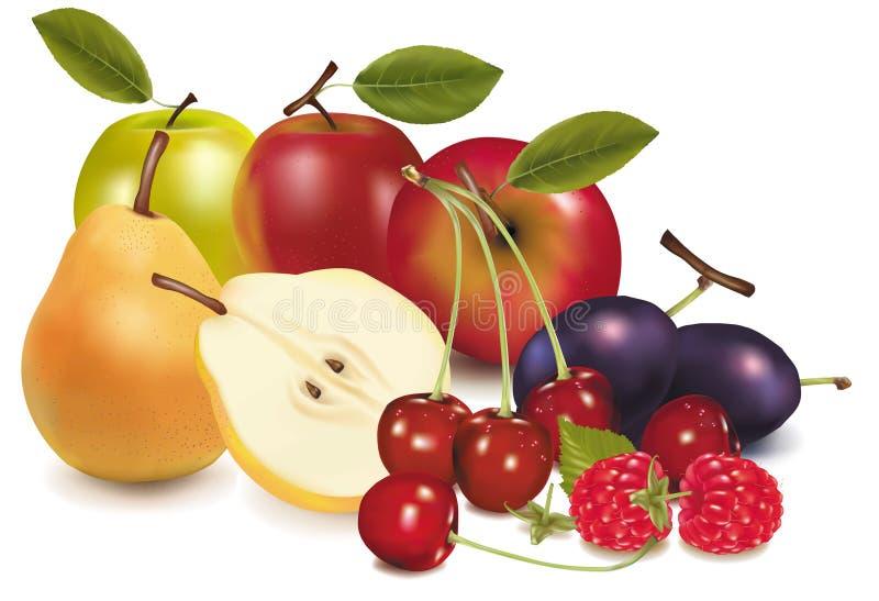 Grupo de fruta. ilustración del vector