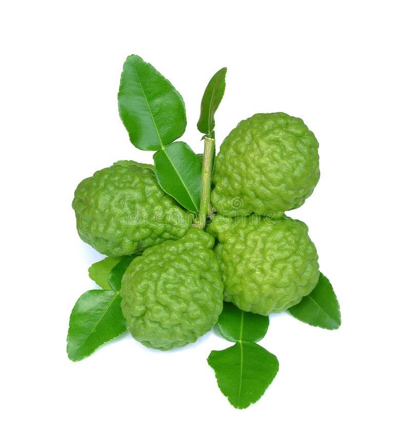 Grupo de fruta de la cal o de la bergamota del cafre en el fondo blanco imagenes de archivo