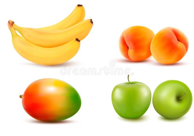 Grupo de fruta. Vector stock de ilustración