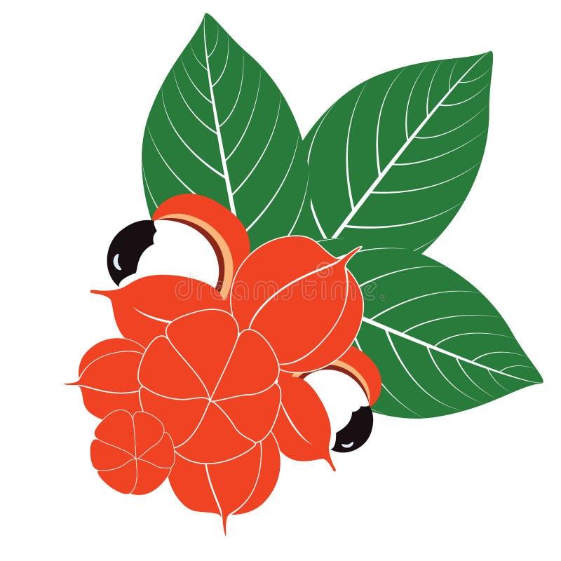 Grupo de frutas y de hojas de Guarana libre illustration