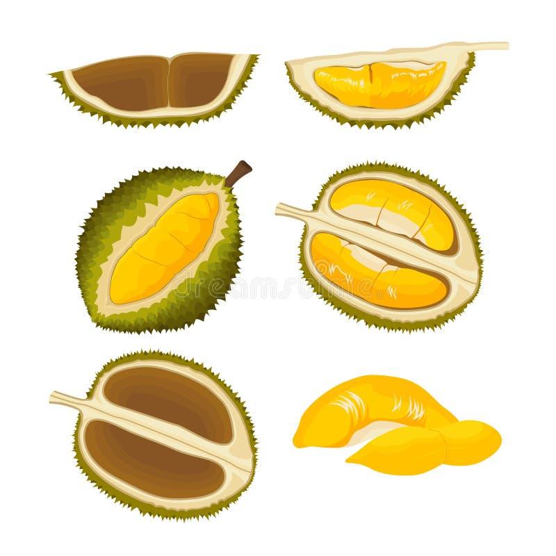 Grupo de fruto tropical asiático do Durian ilustração royalty free