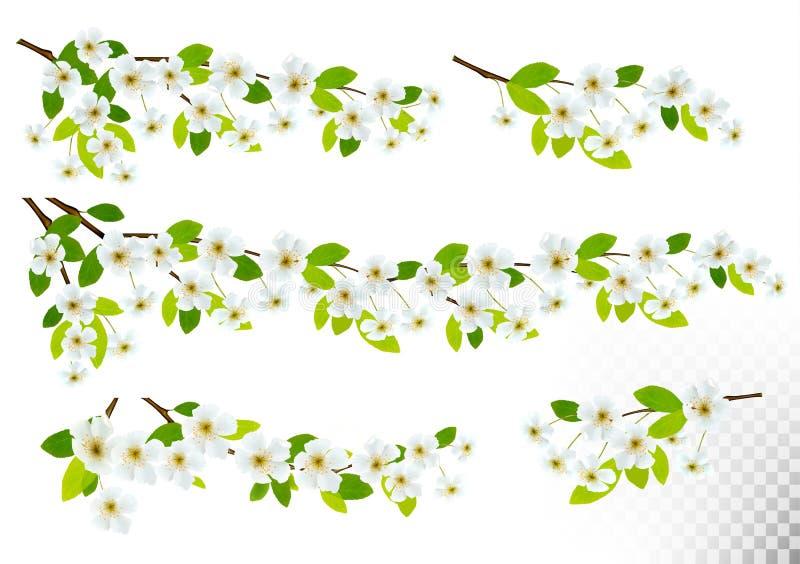 Grupo de fundos da natureza com a flor da mola da cereja ilustração royalty free