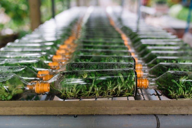 Grupo de garrafa para plântulas da orquídea na exploração agrícola da orquídea em Tailândia fotos de stock royalty free