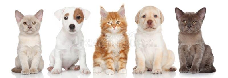 Grupo de gatinho e de cachorrinhos pequenos imagens de stock royalty free