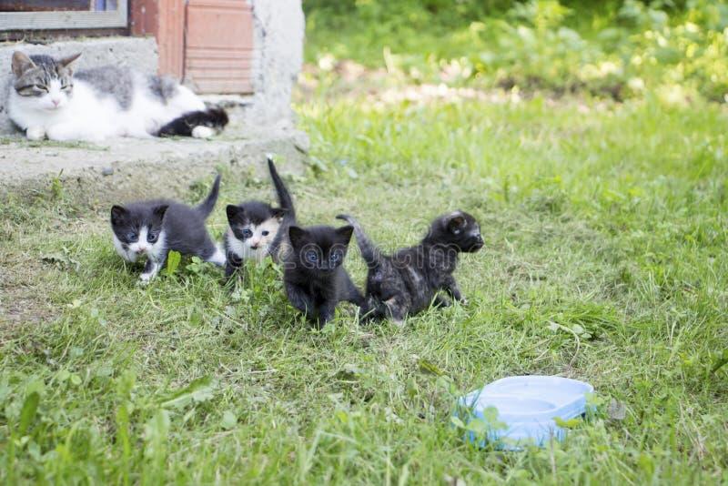 Grupo de gatitos imagen de archivo libre de regalías