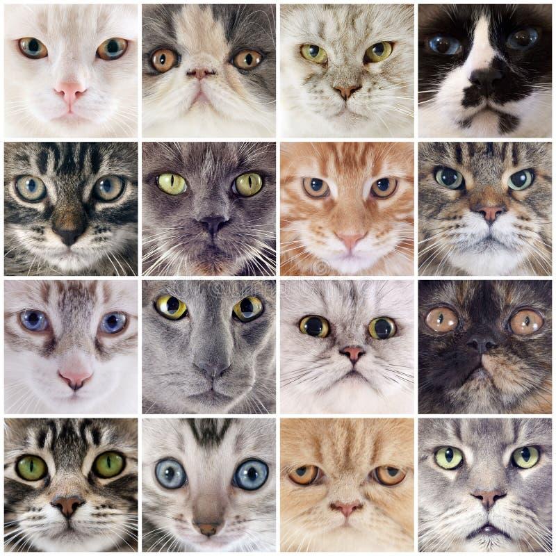 Grupo de gatos imagens de stock royalty free