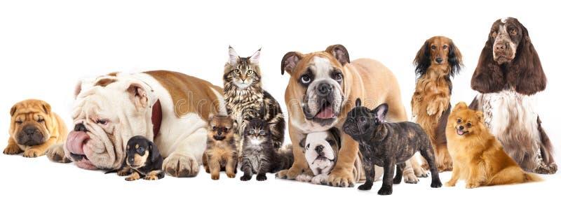 Grupo de gatos e de cães fotos de stock royalty free