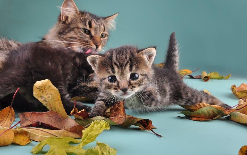Grupo de gatos nas folhas de outono fotos de stock royalty free