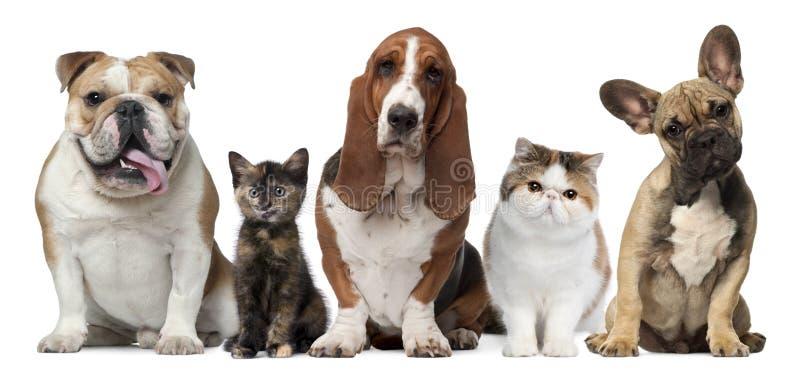 Grupo de gatos y de perros delante del blanco fotos de archivo