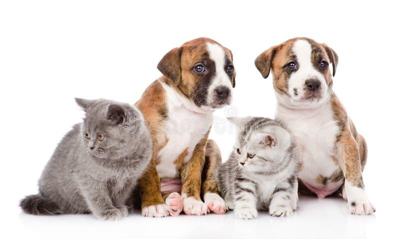 Grupo de gatos y de perros que se sientan en frente En blanco imagen de archivo libre de regalías