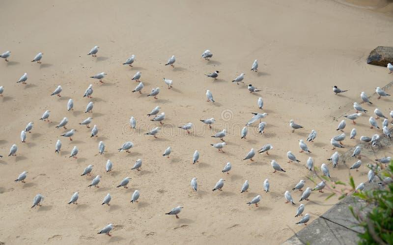 Grupo de gaviotas que descansan en el lado de una playa para evitar el viento frío fotos de archivo