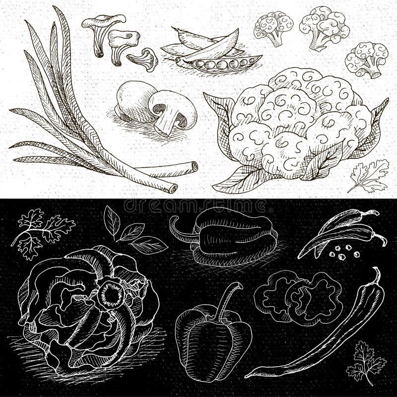 Grupo de giz tirado em um alimento do quadro-negro, especiarias ilustração stock