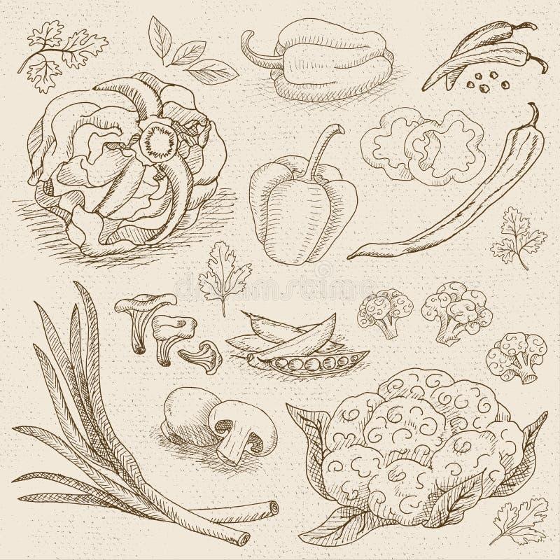 Grupo de giz tirado em um alimento do quadro-negro, especiarias ilustração royalty free
