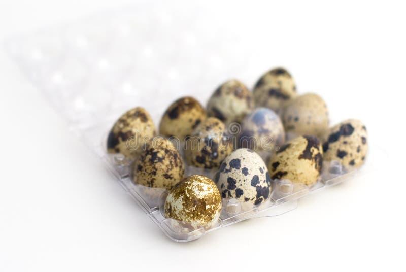 Grupo de huevos de codornices fotos de archivo