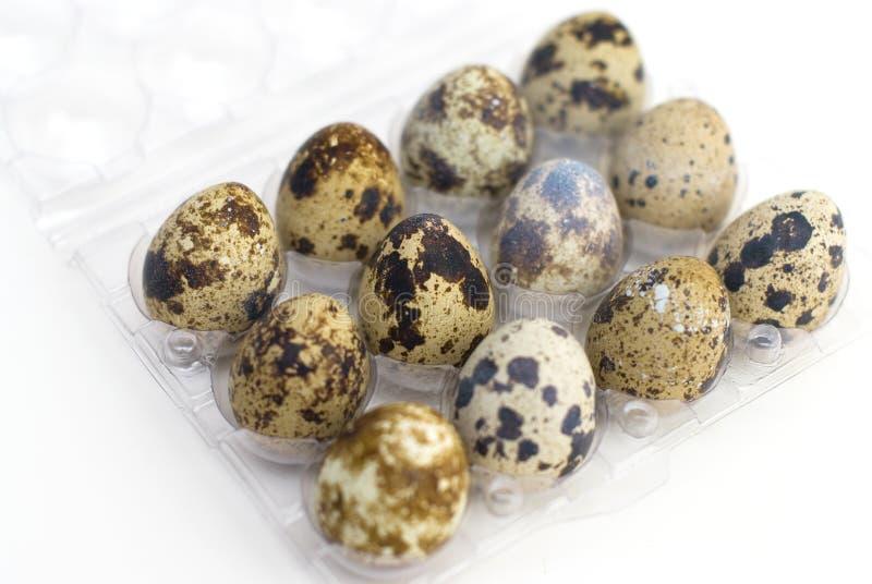 Grupo de huevos de codornices foto de archivo libre de regalías