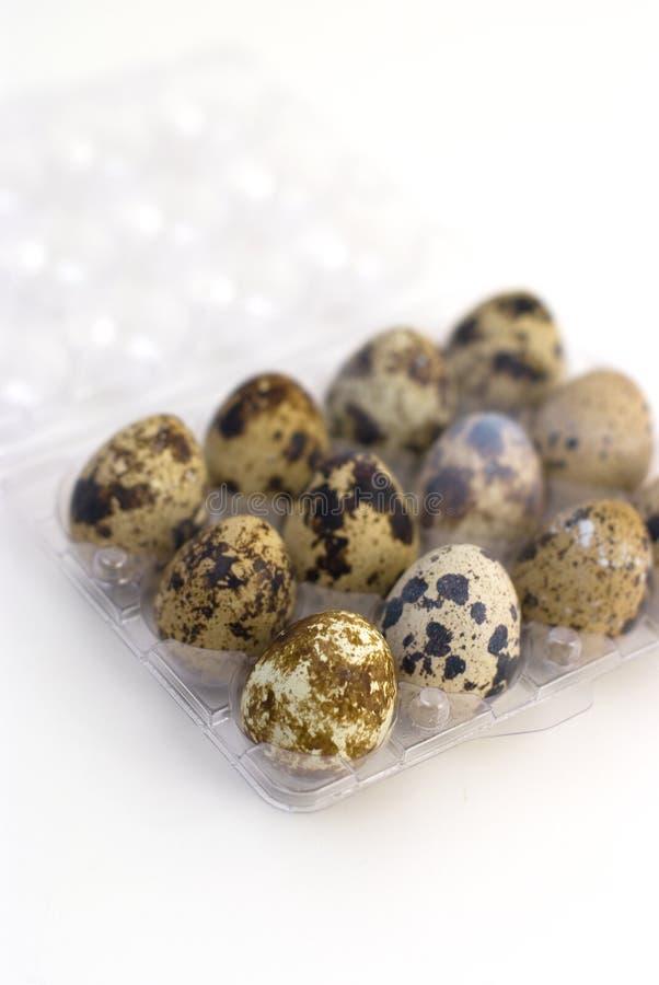Grupo de huevos de codornices imagen de archivo libre de regalías