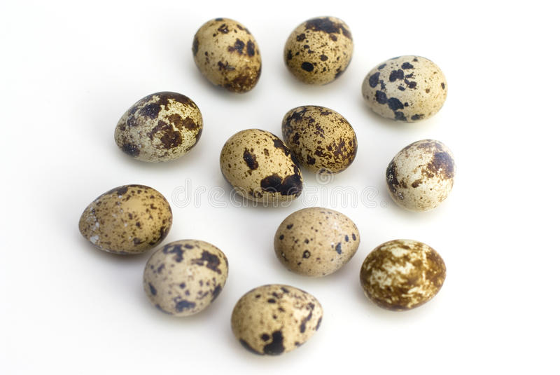 Grupo de huevos de codornices fotografía de archivo libre de regalías