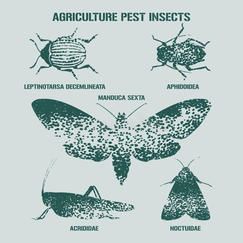 Grupo de ilustração do vetor de insetos da praga com sinais ilustração do vetor