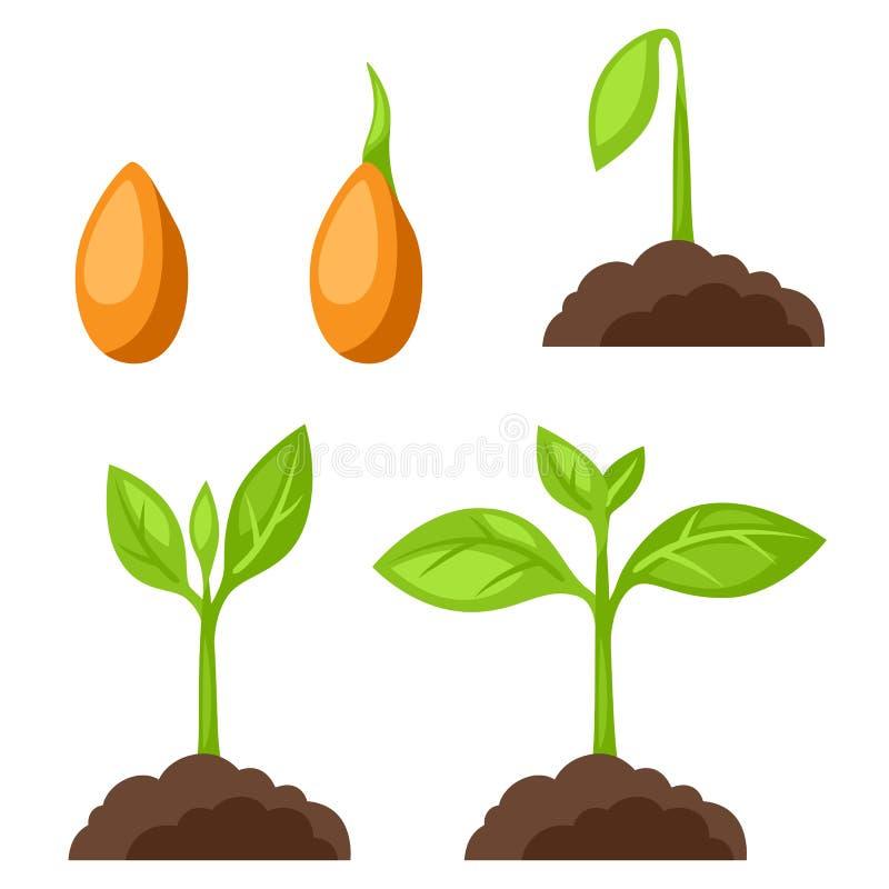 Grupo de ilustrações com crescimento vegetal das fases A imagem para bandeiras, sites, projeta