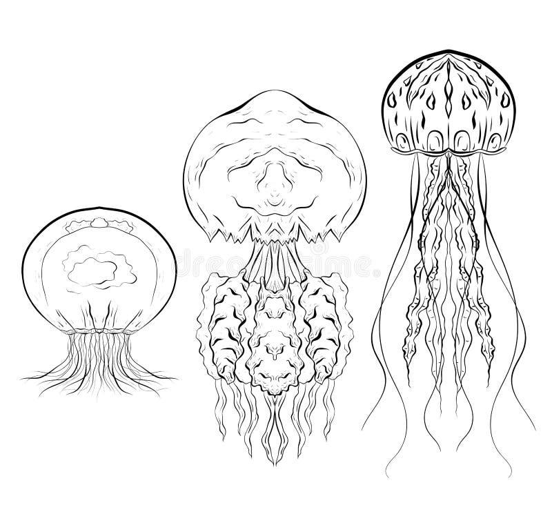 Grupo de ilustrações preto e branco do contorno das medusa O objeto é separado do fundo ilustração royalty free