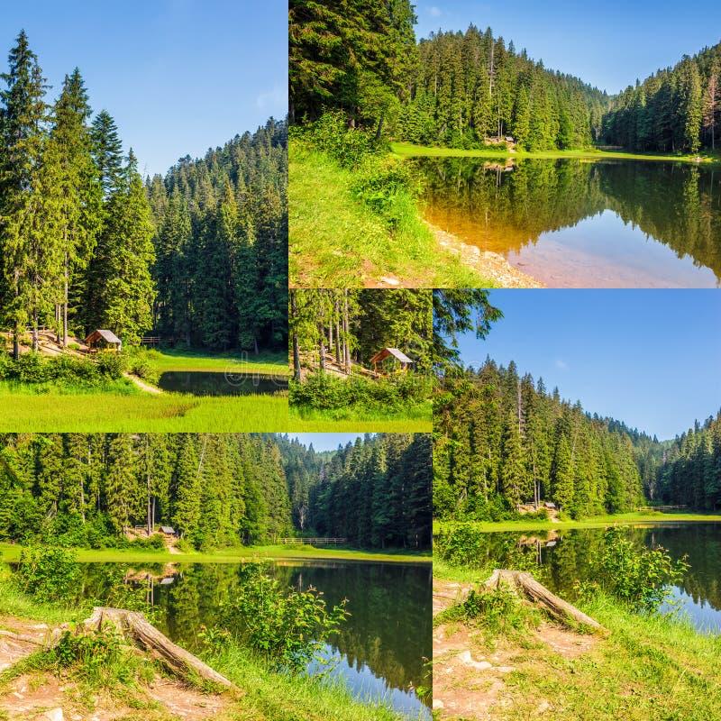 Grupo de imagem de floresta spruce em torno do lago nas montanhas foto de stock royalty free