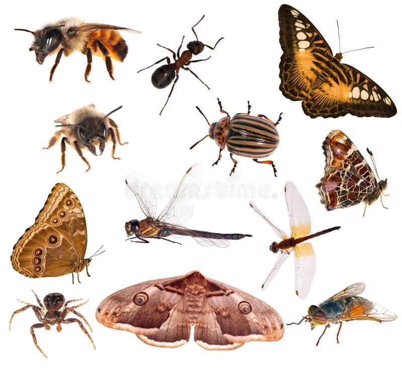 Grupo de insetos marrons da cor isolados no branco fotografia de stock royalty free