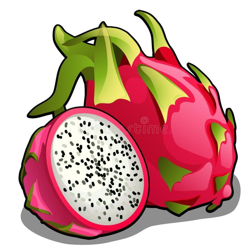 Grupo de inteiro e metade do fruto do pitahaya ou do undatus maduro do Hylocereus, fruto do dragão Elemento de uma dieta saudável ilustração royalty free